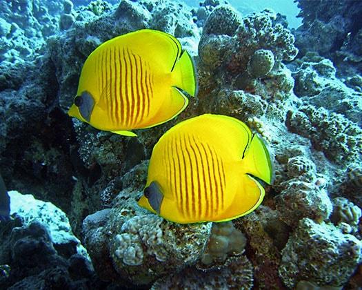Bildergebnis für fisch