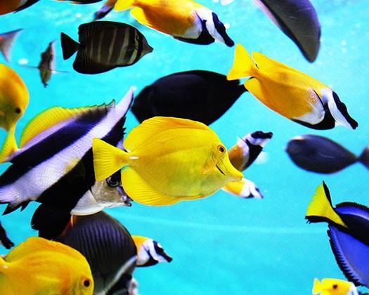 aquarienfische der ratgeber f r aquaristen