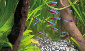 Aquarium für Kinder: Unsere Tipps | ZOO & Co.